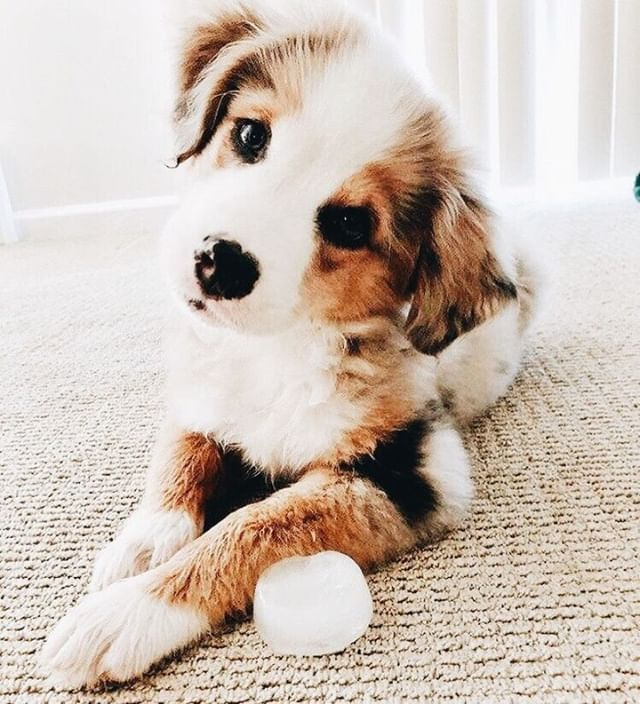Dog Dogs Woof Woofies Dogwoofies Cute Baby Animals Cute