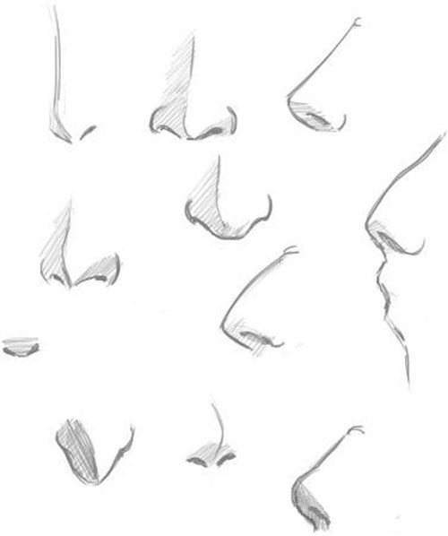 Draw The Human Nose With The Help Of This Nice Reference
