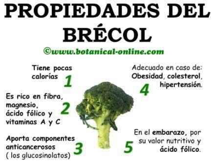 Propiedades curativas del brecol brocoli y sus beneficios para la salud salud brocoli - Informacion sobre la fibra vegetal ...