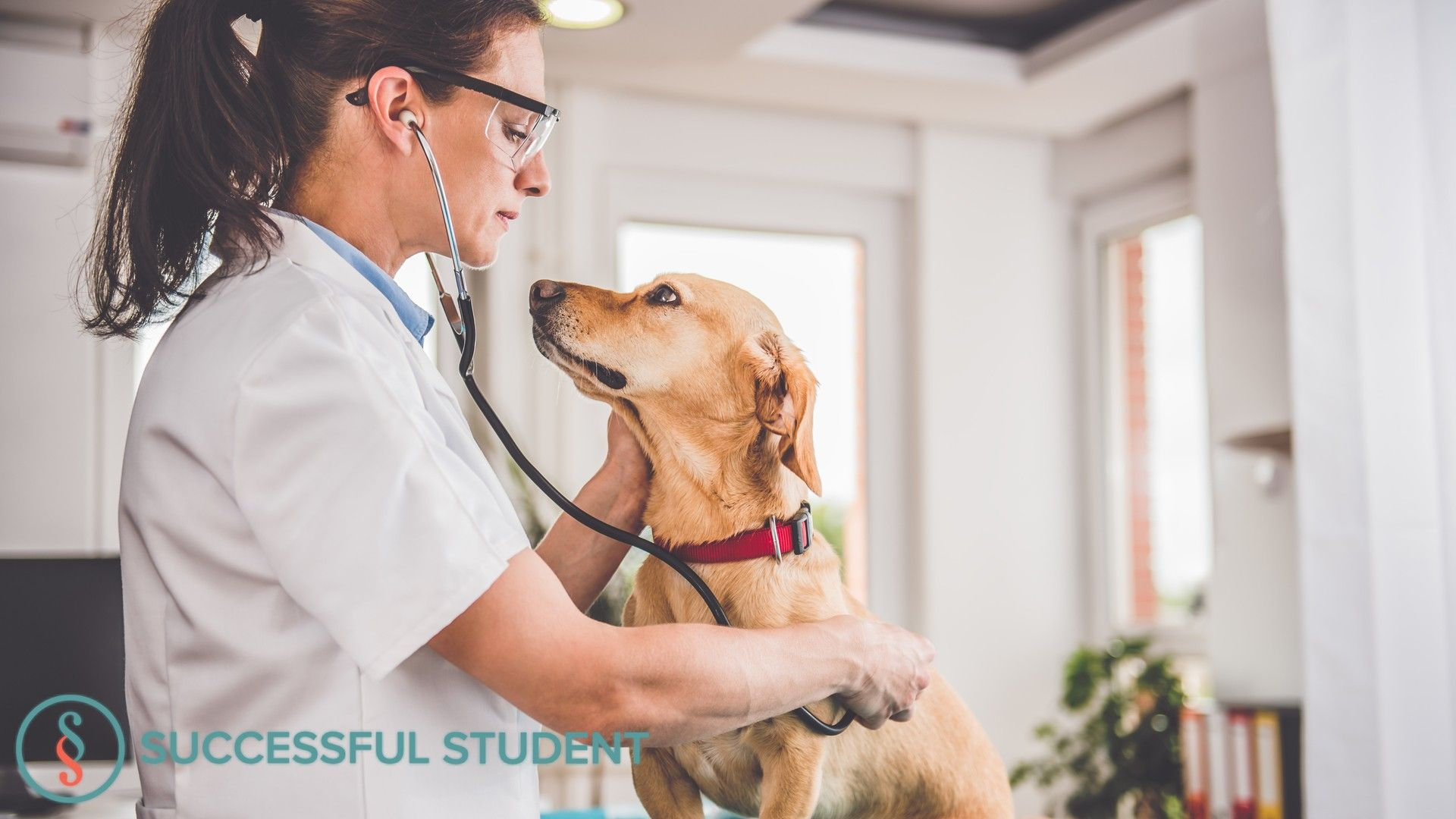 Top 12 Online Veterinary Technology Programs Tapeworms