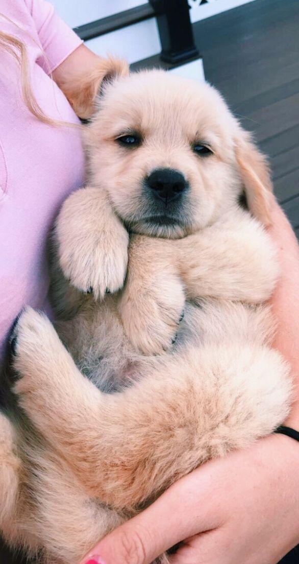 Pin Von Nike Cara Auf Dogs Mit Bildern Susse Tiere Niedliche Hunde Niedliche Tierbabys