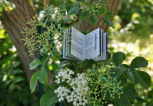 Bin Im Garten Holunderbuch Im Holunderbaum Holunderbaum Holunder Bucher