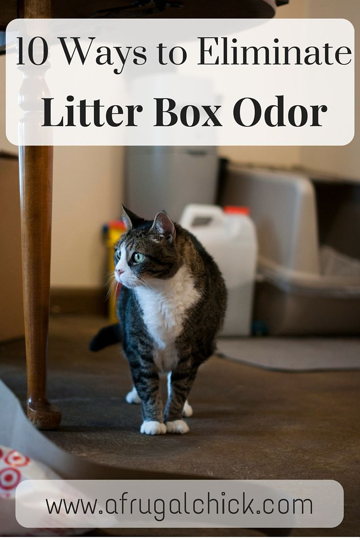 Litter Box Smell Solutions Litter box smell, Litter box