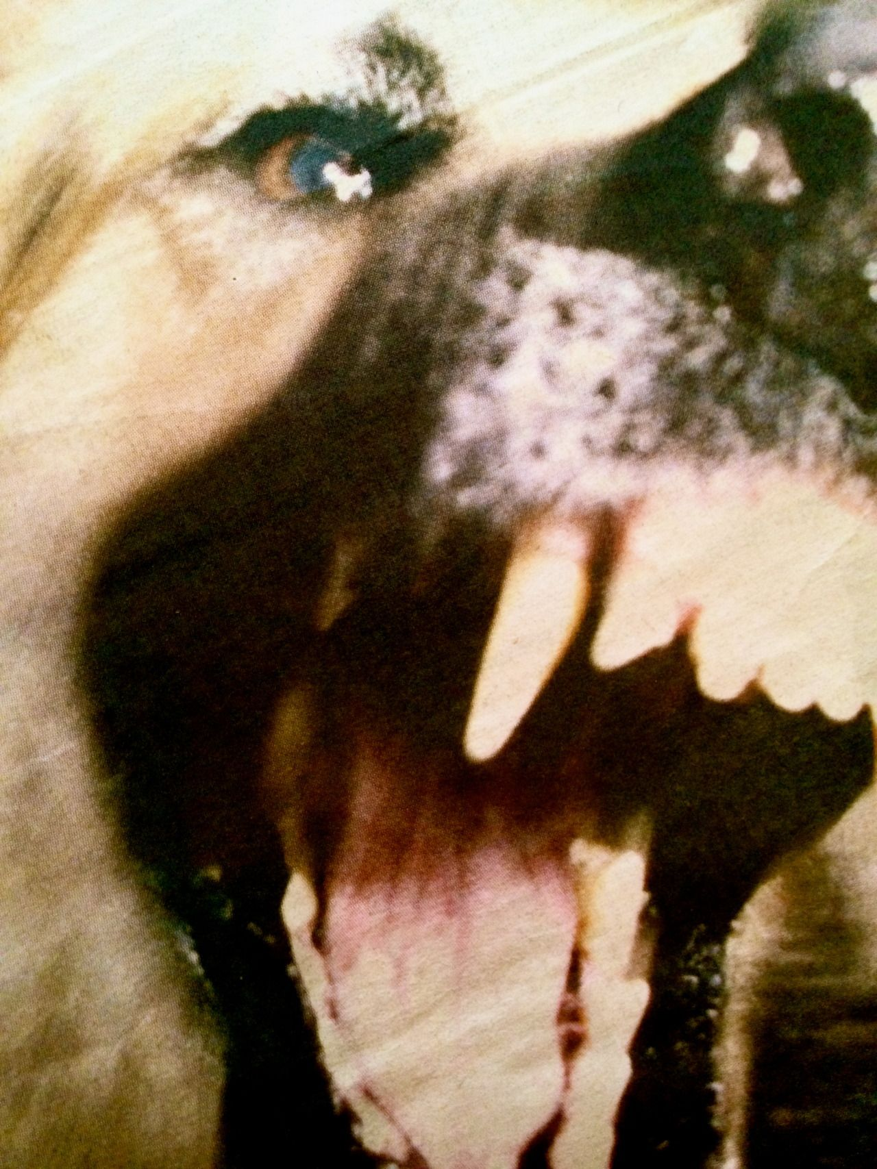 If You Have Been Bitten By A Dog In Chicago Or In Another City In Illinois And Need Legal Representation For Your Injuri Scary Dogs Givenchy Dog Creepy Animals