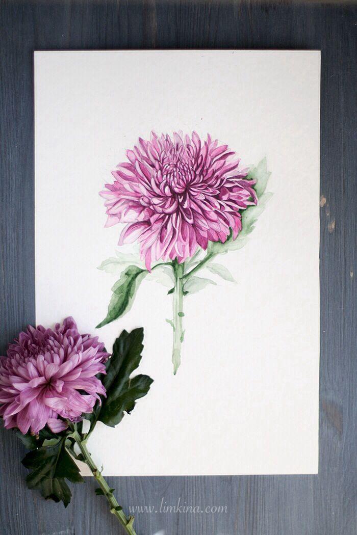 Chrysanthemum Watercolor Illustration By Elena Limkna Chrysanthemum Tattoo Birth Flower Tattoos Chrysanthemum Watercolor