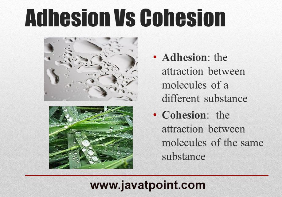 Adhesion vs Cohesion javatpoint Adhesive, Science, Image