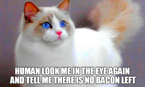 Funny Memes For Lovers : Catsmemes funny animal pictures cat memes #cats #funnycatsjust