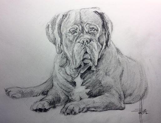 Perro Dogo De Burdeos Dibujo A Lapiz Por Francisco Javier Abellan Dogo De Burdeos Dibujos De Perros Perros