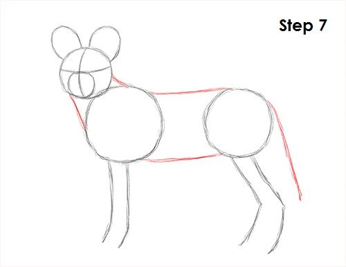 How To Draw An African Wild Dog Wild Dogs African Wild Dog