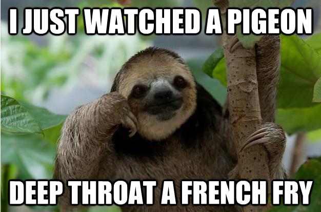 Sloth porn — pic 6