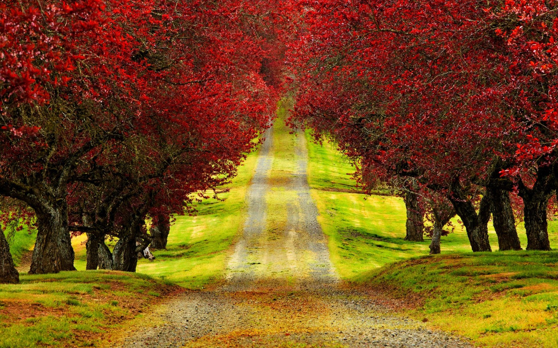 Red Trees Autumn Road Beautiful HD Wallpaper