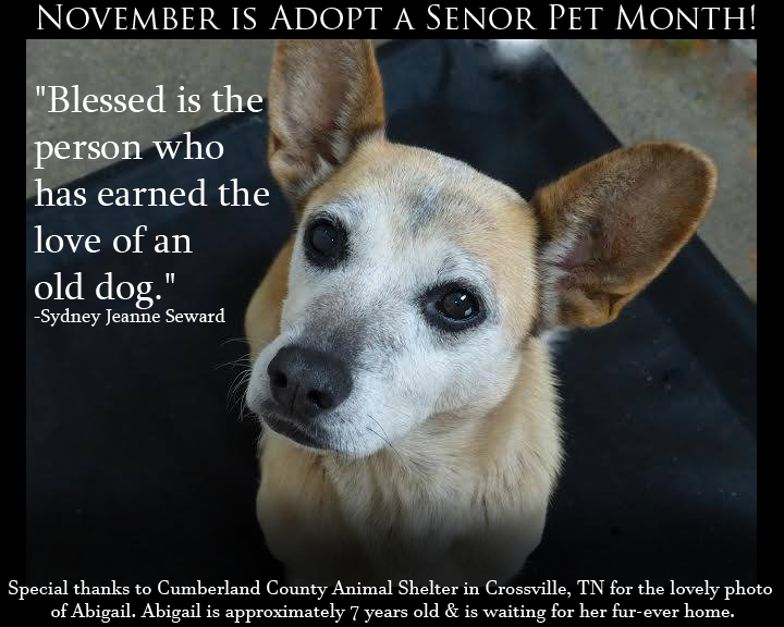 Blessed Is The Person Who Has Earned The Love Of An Old Dog Sydney Jeanne Seward Old Dogs Animal Rescue Pets