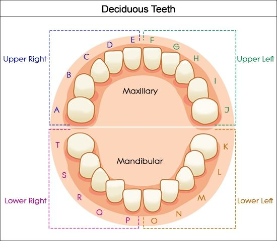 Dental Charts to Help You Understand the Tooth Numbering System ...