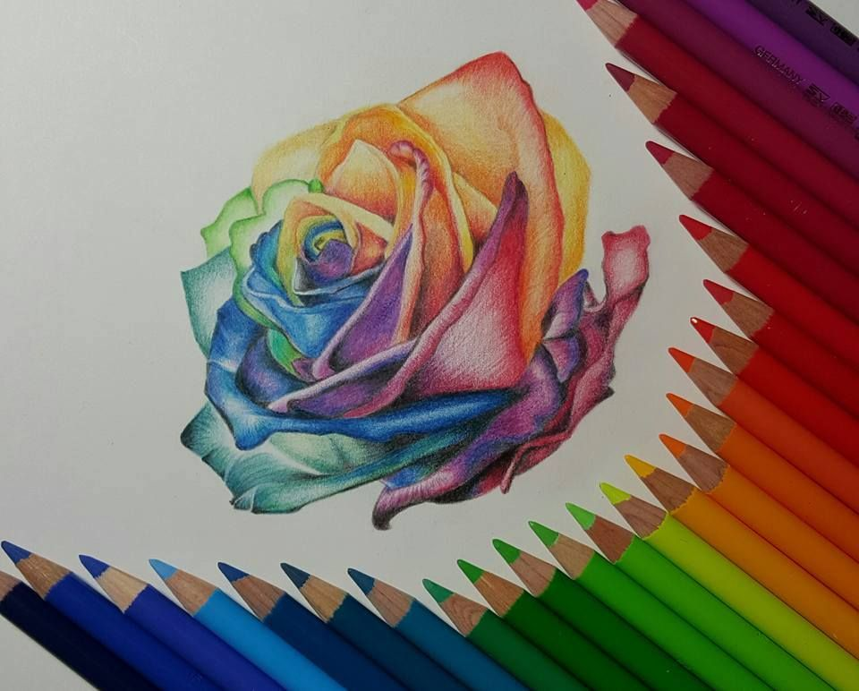 Rose Color Pencil Drawing By Gaby Sabbagh Read Full Article Http