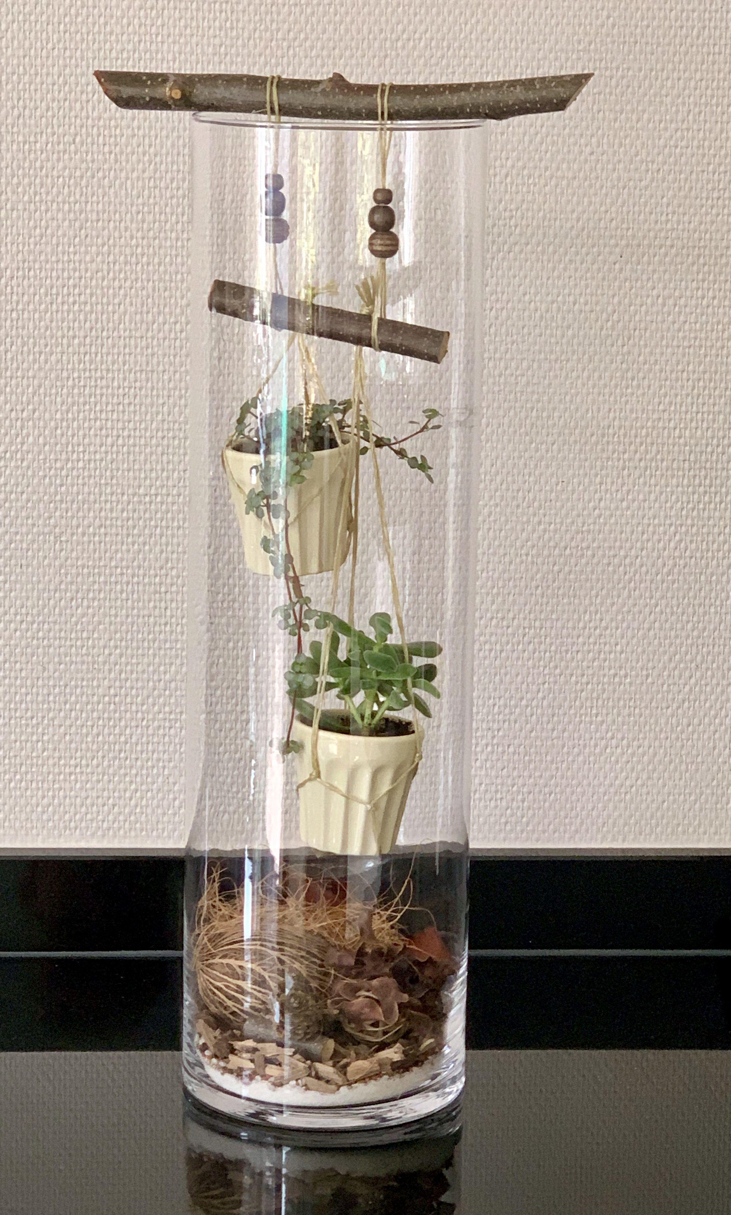 Groen In Hoge Glazen Vaas Glasvasen Dekorieren Zimmerpflanzen Dekor Hohe Glaser Dekorieren
