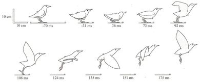 Picture All Things Winged Pinterest Animation Bird