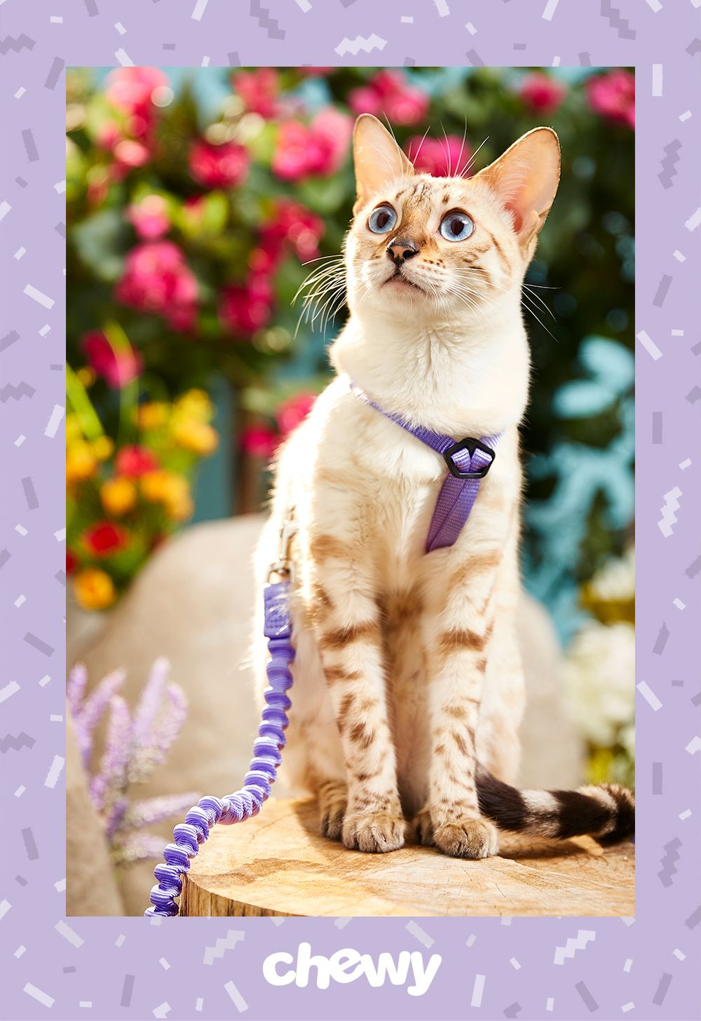 Finding The Perfect Leash That Allows You To Share Enjoyable Walks Exercise With Your Feline Friend Can Be Tough The Petsafe Cat Leash Cats Kitty