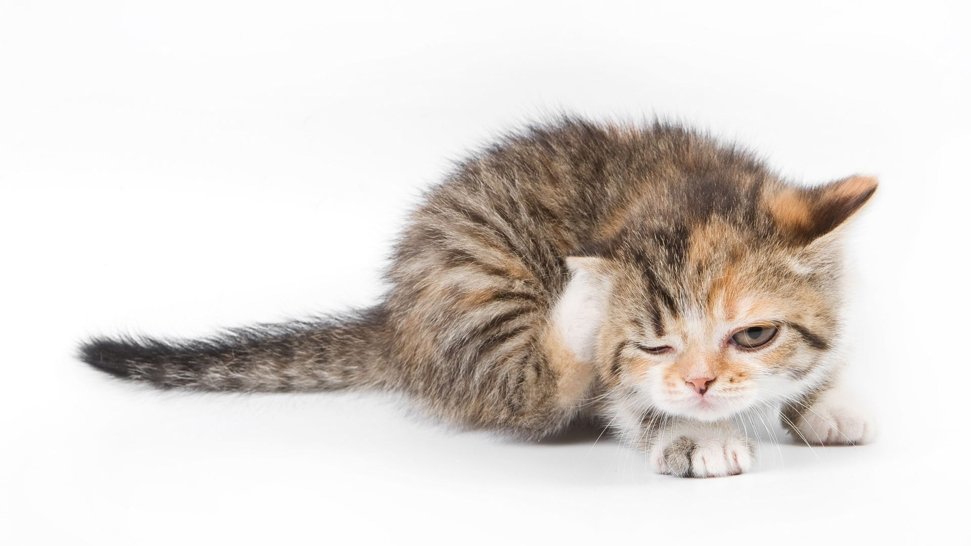 Image Search Results For Wallpaper 1920 X 1080 Cute 画像あり 可愛すぎる動物 面白い猫の写真 動物