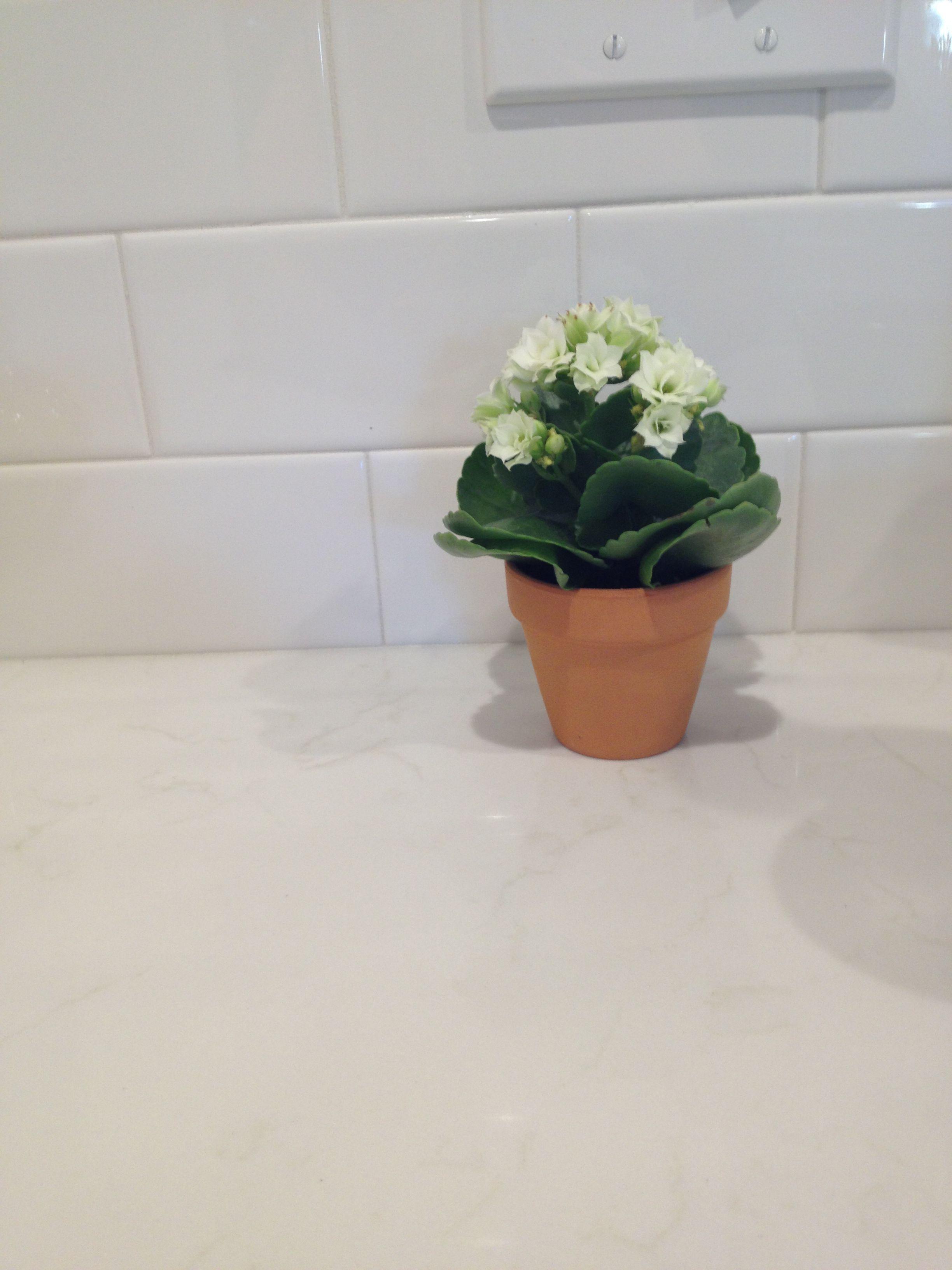 Pental quartz lattice | White kitchens | Pinterest | Kitchens and ...