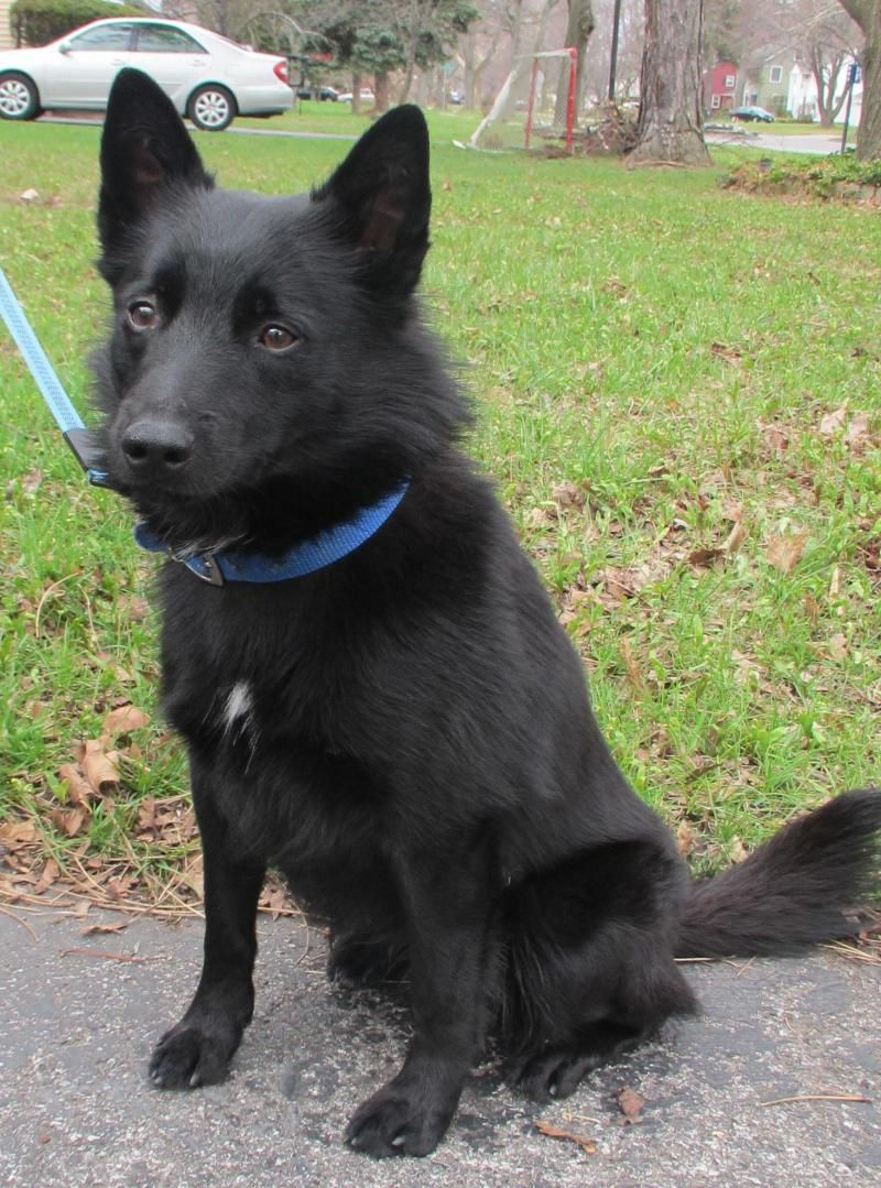 Adopt Jack on Best dogs, Dogs, Pet adoption