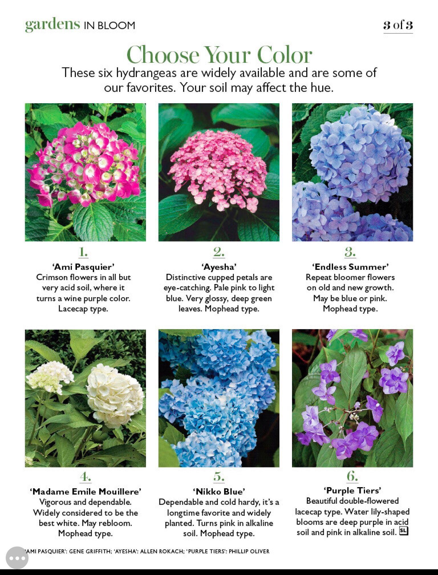 Pin By Bonnie Hausfeld On Hydrangeas Hydrangea Varieties Planting Hydrangeas Flower Meanings