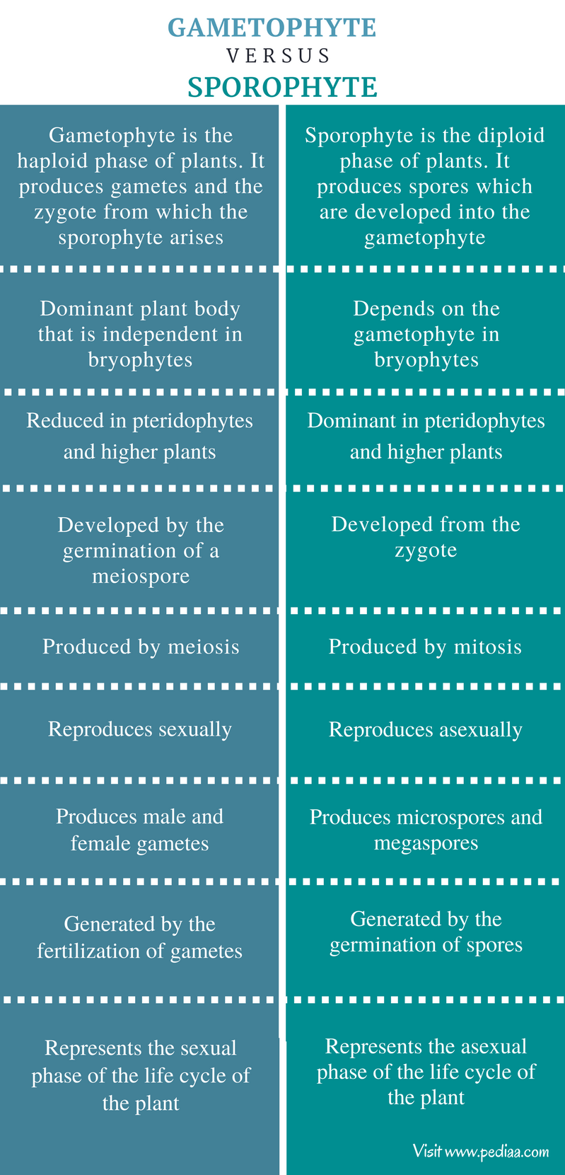 Difference Between Gametophyte And Sporophyte Definition Formation Characteristics Tissue Biology Circulatory System Brain Facts