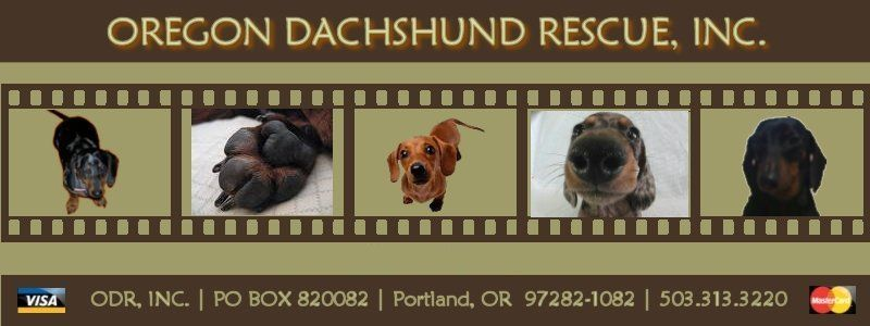 Oregon Dachshund Rescue Inc Is A Non Profit All Volunteer No