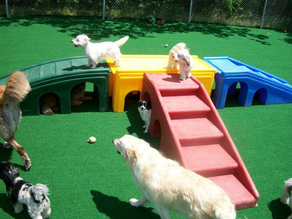Puppy Playground Equipment & Turf Dreams For my Farm