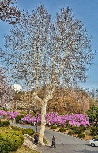 ♪ この木なんの木 気になる木 名前も知らない 木ですから 名前も知らない木になるでしょう♪   【作詞】伊藤アキラ 【作曲】小林亜星