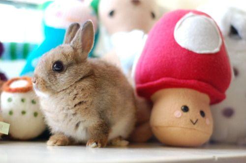 Bunnyyyyyyyy