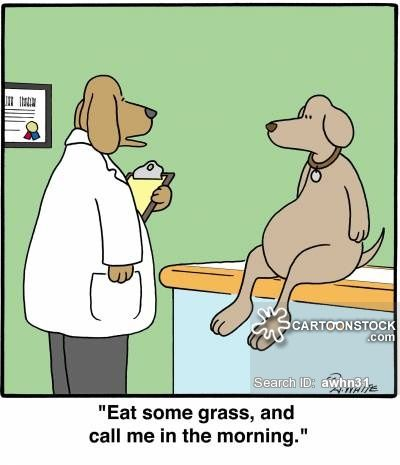 Stomach Aches Cartoon Animal Humor Dog