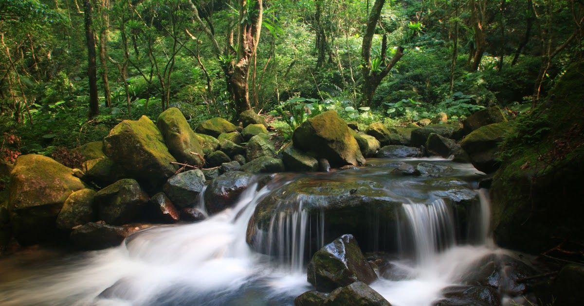 Baru 30 Download Gambar Pemandangan Resolusi Tinggi Free Images Landscape Forest Waterfall Creek Download Ini Dia Foto Dengan Di 2020 Pemandangan Gambar Lanskap