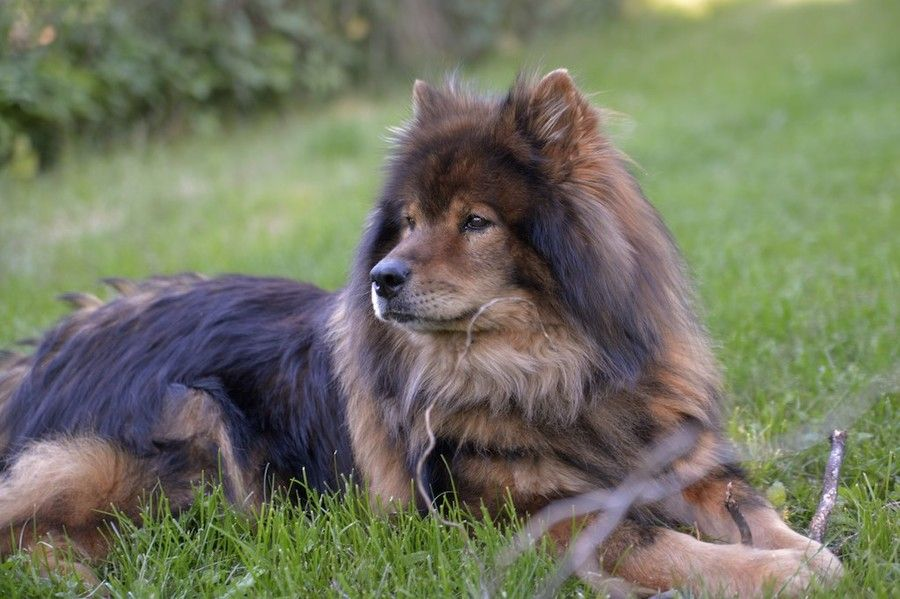 Eurasier Dog By Andreas Piller On 500px Beautiful Dogs Dogs Dog Breeds