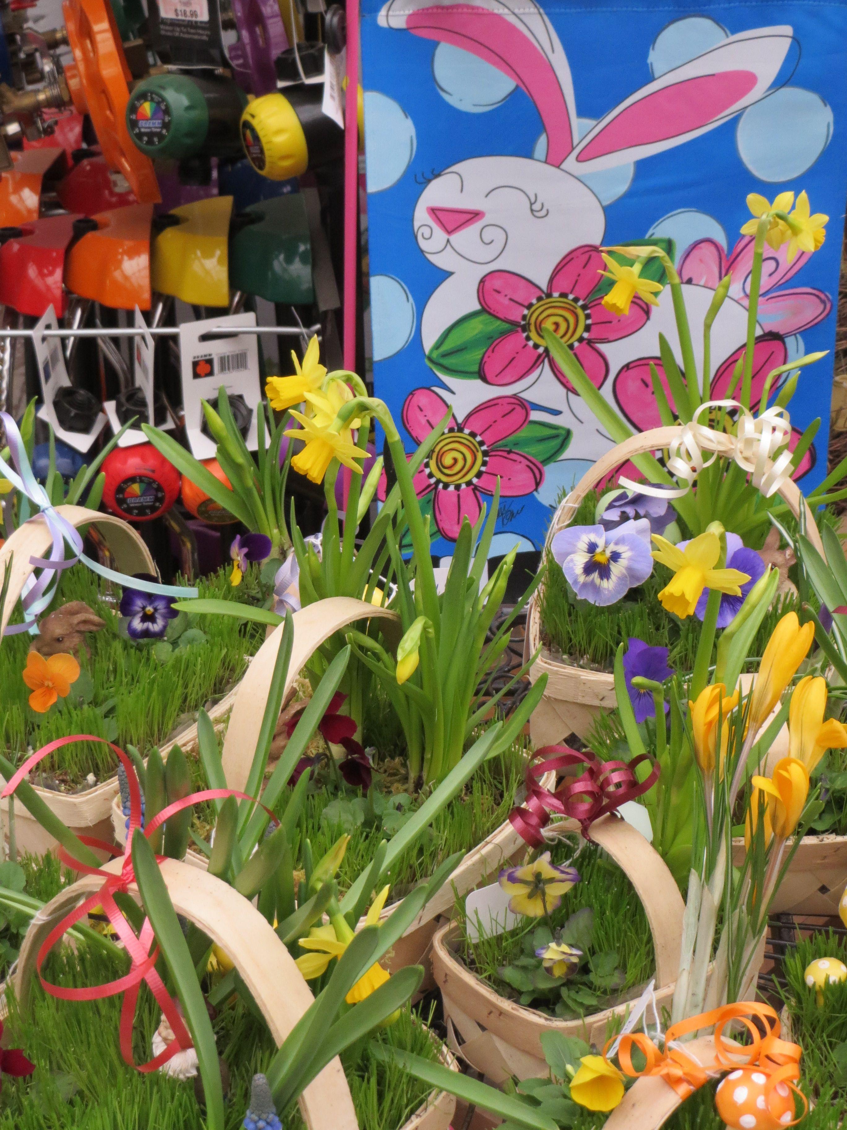 Spring has sprung here at Bristol's Garden Center (Victor