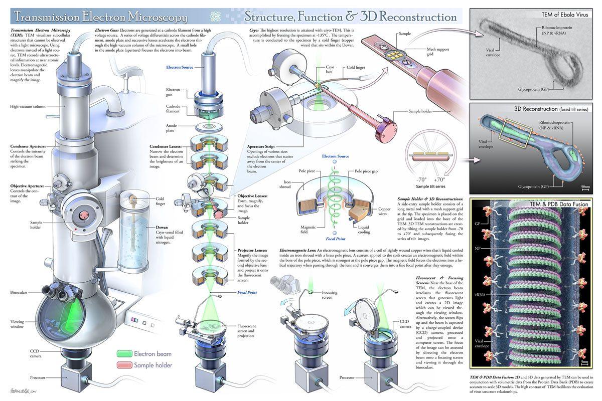 Transmission Electron Microscopy Structure Function And 3d Reconstruction Electron Microscope Images Microscopy Science