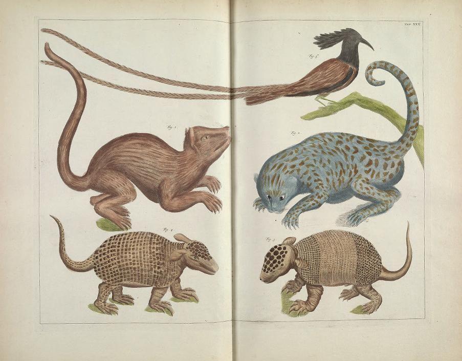 1 - Locupletissimi rerum naturalium thesauri accurata descriptio, et iconibus artificiosissimis expressio, per universam physices historiam ...