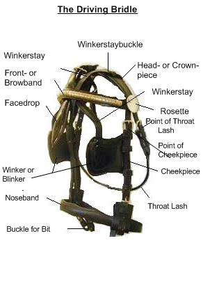 Anatomy Of Horse Harness - WIRE Center •