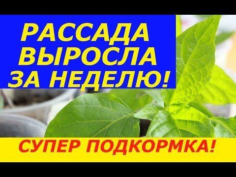 РЕЦЕПТЫ блюд русских монастырей. МОНАСТЫРСКИЕ БЛЮДА 15