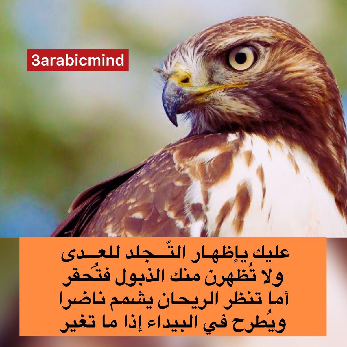 اظهر قوة تحملك و صبرك امام الاعداء Arabic Words Words