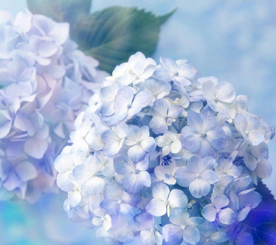Gardening That I Love おしゃれまとめの人気アイデア Pinterest بسومه 花