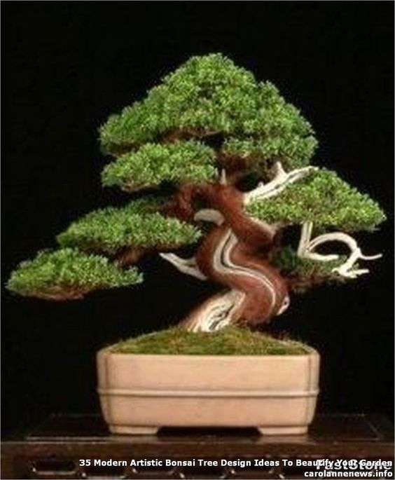 35 #Modern #Artistic #Bonsai #Tree #Design #Ideas #To #Beautify #Your #Garden#artistic #beautify #bonsai #design #garden #ideas #modern #tree