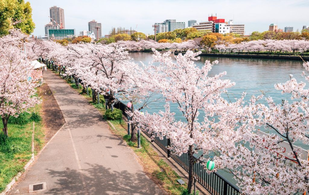 Top 10 Places To See Cherry Blossoms In And Around Osaka Gaijinpot Travel Cherry Blossom Japan Japan Travel Places To See