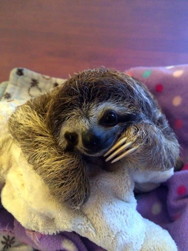 Sloth going to the bathroom - Animal