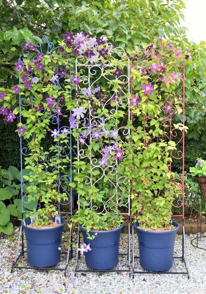 Photo of 一鉢に2株植えて花いっぱいのクレマチスを咲かせよう!