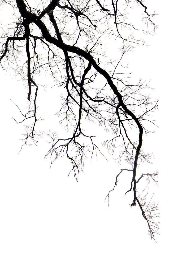 Oak Limb Mary Jo Hoffman Tree Art Tree Drawing Tree Sketches