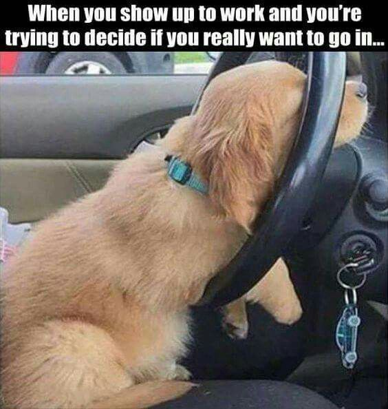 18 Puppies Who Really Need Someone To Help Them Funny Animal Memes Funny Pictures Funny Dogs