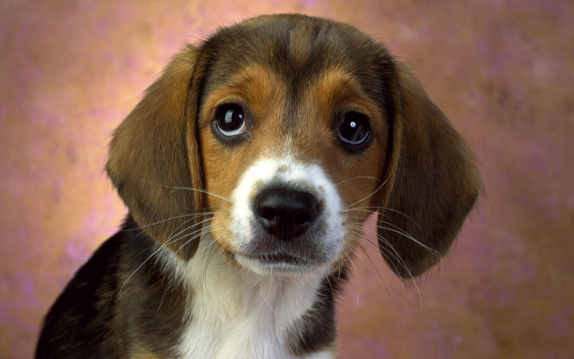 Cute dog cute animals pinterest dog dog cancer and veterinarians