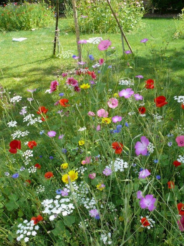 Prairie fleurie Tout type de sol sur le Mur Végétal