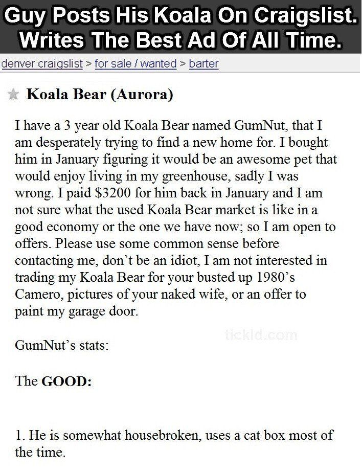 Guy Posts Koala On Craigslist In The Most Hilarious Ad You Ve Ever