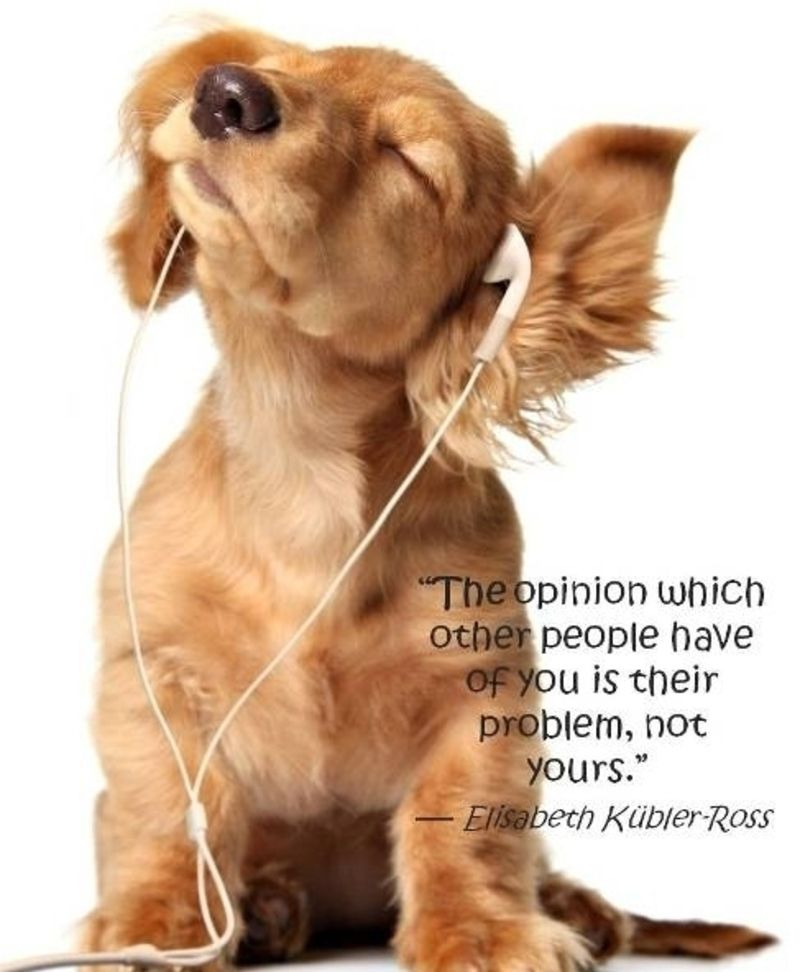 9 Best Quotes From Elisabeth Kubler Ross Dog Wallpaper Animal Wallpaper Fluffy Animals